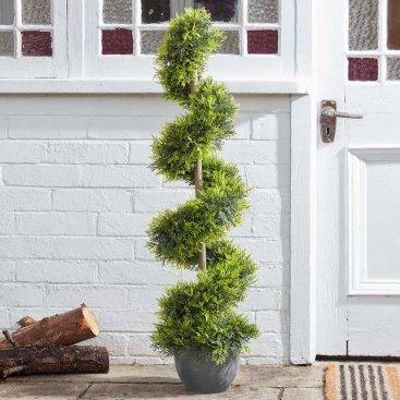 Cypress Topiary Twirl