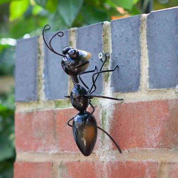 Ant Medium