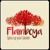 Flamboya