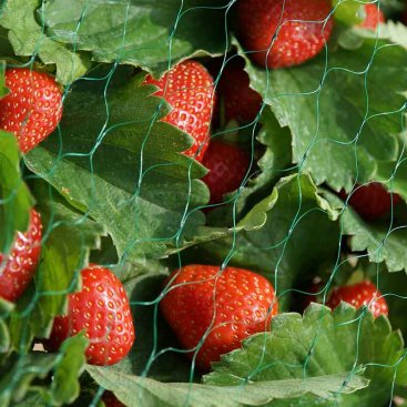 Garden Netting, 15mm, 2x5m, Green