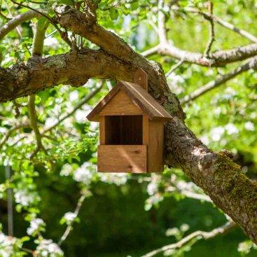 Premier Robin Nest Box, FSC 1