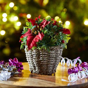 Festive Baskets