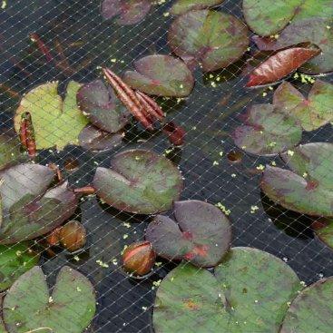 Pond & Fruit Cage Netting, 12mm, 2x10m, Black