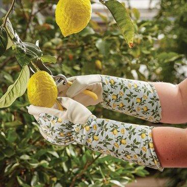 Sicilian Lemon Garden Gauntlet M8