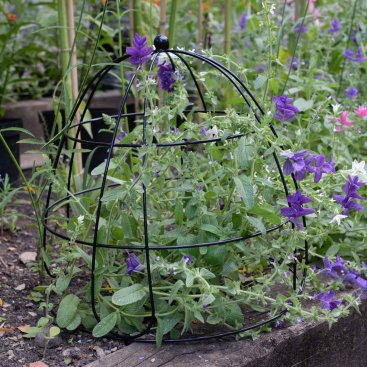 Beehive Plant Support 45cm
