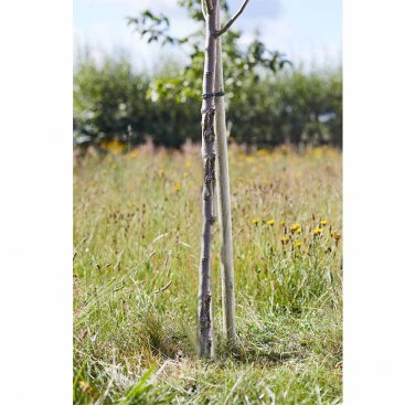 Round Tree Stake 2.4m x 50mm, FSC 1