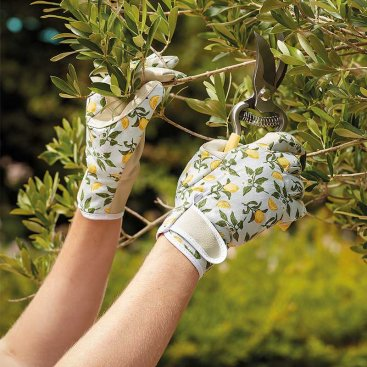 Sicilian Lemon Smart Gardeners M8