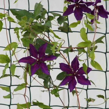 Climbing Plant and Fencing Mesh – 50mm, 1m x 5m, Brown