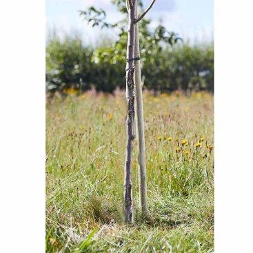 Round Tree Stake 2.1m x 50mm, FSC 1