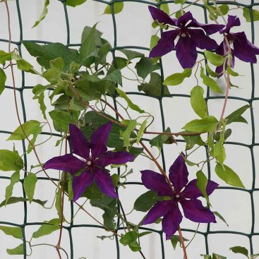 Climbing Plant and Fencing Mesh – 50mm, 1m x 5m, Green