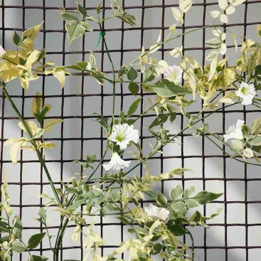 Climbing Plant and Fencing Mesh – 50mm, 0.5m x 5m, Brown