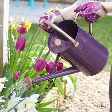Watering Cans & Buckets