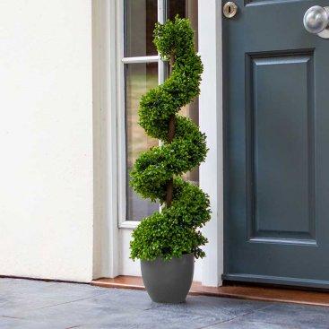 Topiary Twirl